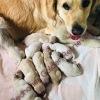 Sono nati! i cuccioli di Nina e Rebel