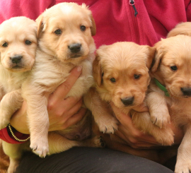 5 cuccioli-grande_Fotor