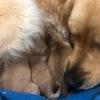 Sono nati! i cuccioli di Margot e Lord
